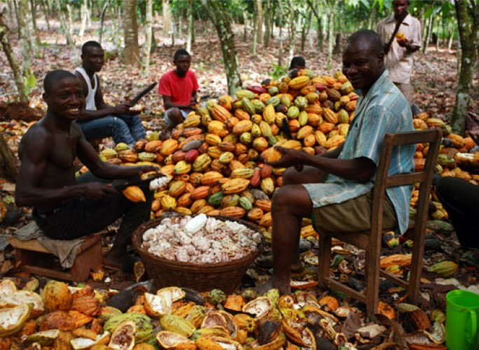 Ghana to lose position on World cocoa league - CAL